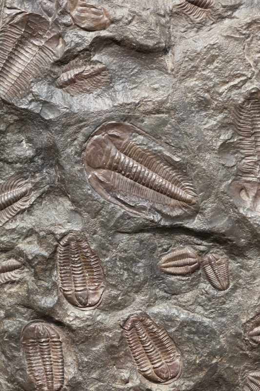 ancient-165001_1280-fossils